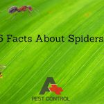 25 Facts About Spiders