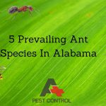 5 Prevailing Ant Species In Alabama