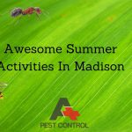 Awesome Summer Activities In Madison AL