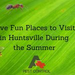 Five Fun Places to Visit in Huntsville During the Summer