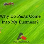 Why Do Pests Come Into My Business